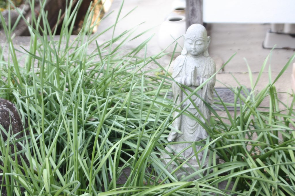Mönch im Gras