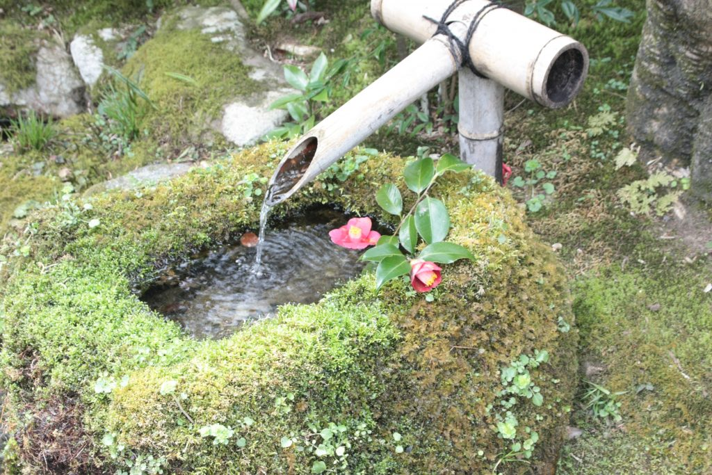 Wasserbambus