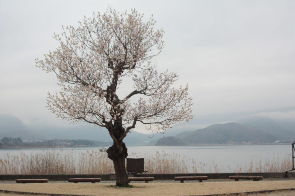 Japan 2016 932
